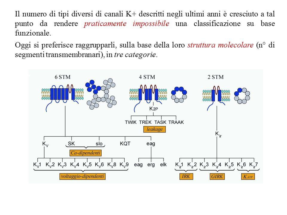 b) ogni organismo ha numerosi geni che codificano per subunità dei canali del K+ c) ogni gene può dar luogo ad isoforme diverse per splicing alternativo.