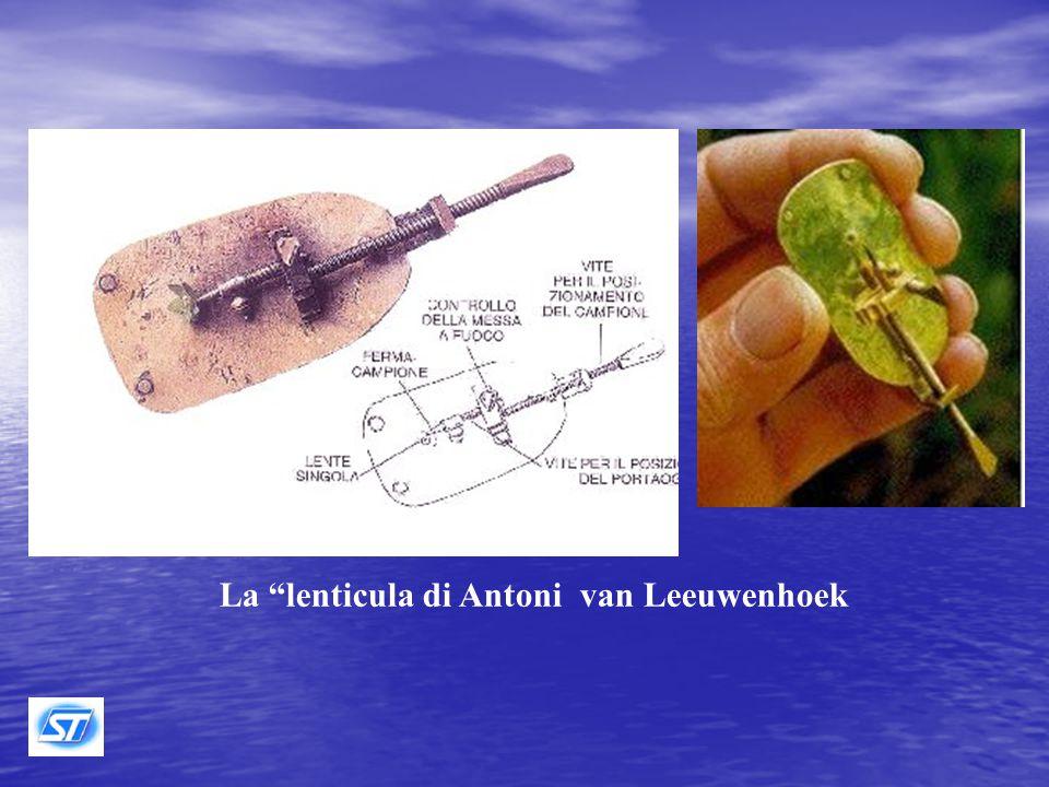 Nel 1668, all'età di 36 anni, van Leeuwenhoek, affascinato dalla lettura del libro Micrographia di Robert Hook, imparò a lavorare le lenti, costruì il primo esemplare del suo semplice microscopio e cominciò a fare le sue prime osservazioni.