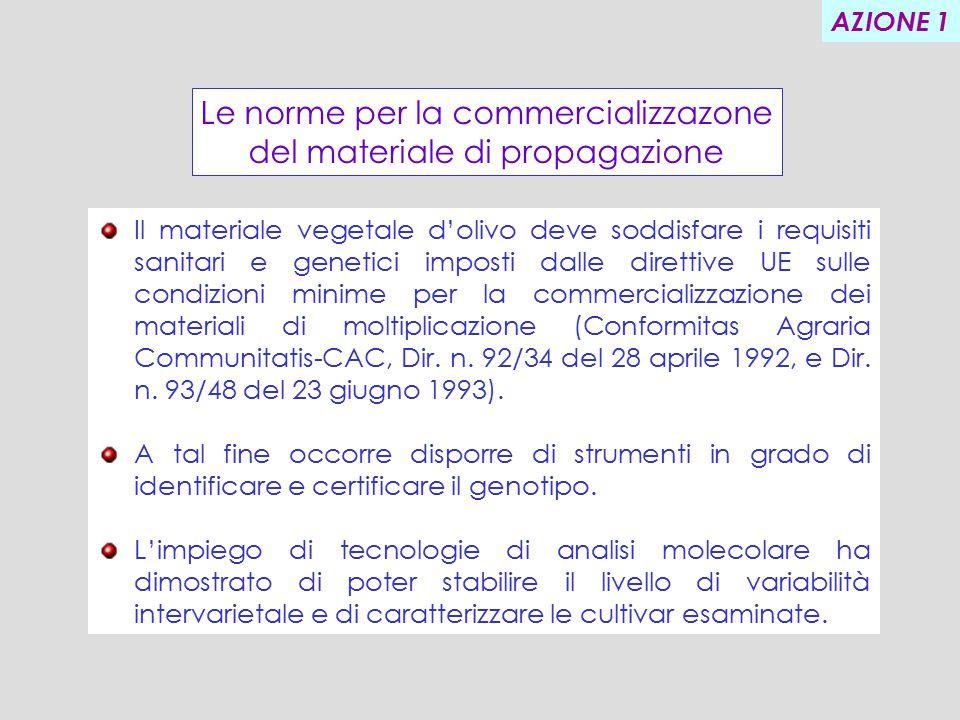 Il materiale vegetale d'olivo deve soddisfare i requisiti sanitari e genetici imposti dalle direttive UE sulle condizioni minime per la commercializzazione dei materiali di moltiplicazione (Conformitas Agraria Communitatis-CAC, Dir.
