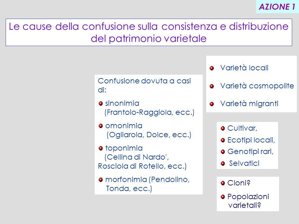 I ANNO Scelta delle varietà.Raccolta dei campioni per analisi molecolare.