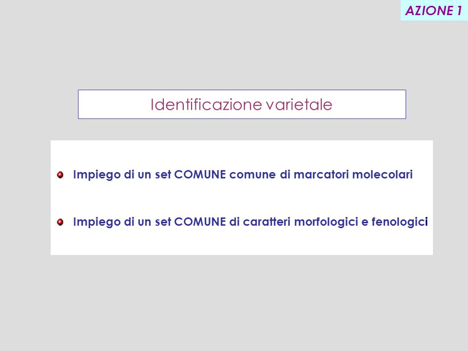Identificazione varietale Impiego di un set COMUNE comune di marcatori molecolari Impiego di un set COMUNE di caratteri morfologici e fenologici AZIONE 1