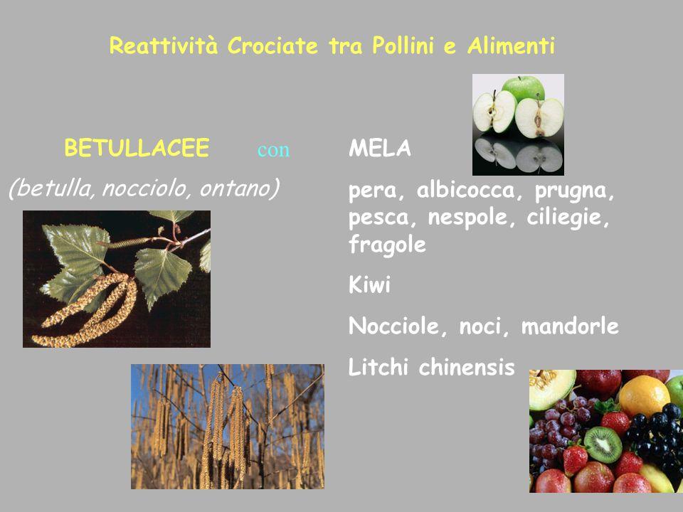 Reattività Crociate tra Pollini e Alimenti BETULLACEEMELA pera, albicocca, prugna, pesca, nespole, ciliegie, fragole Kiwi Nocciole, noci, mandorle Lit