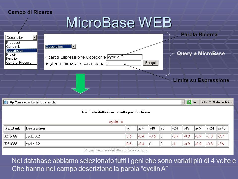 MicroBase WEB Query a MicroBase Campo di Ricerca Parola Ricerca Limite su Espressione Nel database abbiamo selezionato tutti i geni che sono variati più di 4 volte e Che hanno nel campo descrizione la parola cyclin A