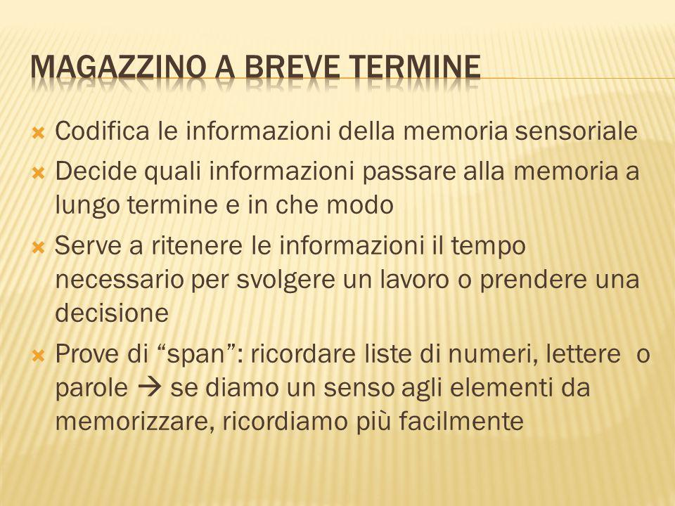  Le informazioni che arrivano dalla MBT vengono ricodificate ed immagazzinate, per poi poter essere recuperabili.