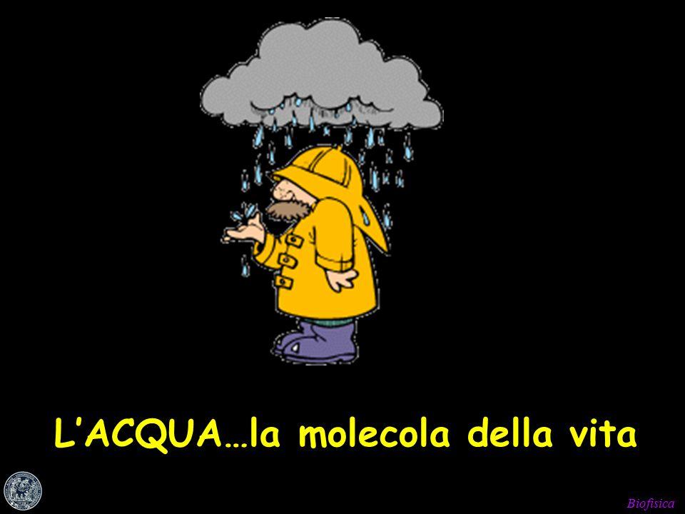 Biofisica L'ACQUA…la molecola della vita