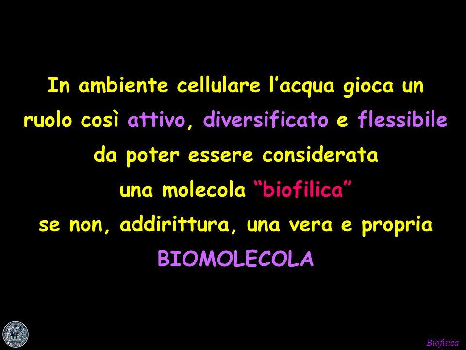 Biofisica In ambiente cellulare l'acqua gioca un ruolo così attivo, diversificato e flessibile da poter essere considerata una molecola biofilica se non, addirittura, una vera e propria BIOMOLECOLA