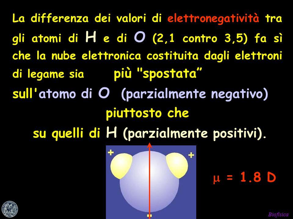 Biofisica La differenza dei valori di elettronegatività tra gli atomi di H e di O (2,1 contro 3,5) fa sì che la nube elettronica costituita dagli elettroni di legame sia più spostata sull atomo di O (parzialmente negativo) piuttosto che su quelli di H (parzialmente positivi).