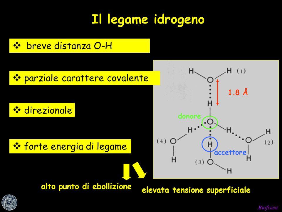 Biofisica  forte energia di legame Il legame idrogeno  breve distanza O-H  parziale carattere covalente  direzionale donore accettore alto punto di ebollizione Alta tensione elevata tensione superficiale 1.8 Å