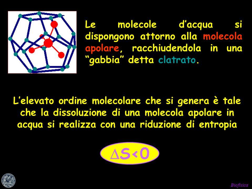 Biofisica  S<0 Le molecole d'acqua si dispongono attorno alla molecola apolare, racchiudendola in una gabbia detta clatrato.