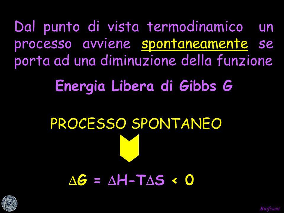 Biofisica Dal punto di vista termodinamico un processo avviene spontaneamente se porta ad una diminuzione della funzione Energia Libera di Gibbs G PROCESSO SPONTANEO  G =  H-T  S < 0