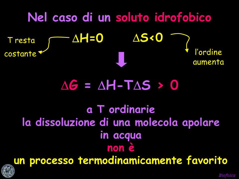 Biofisica Nel caso di un soluto idrofobico  H=0 T resta costante  S<0 l'ordine aumenta  G =  H-T  S > 0 a T ordinarie la dissoluzione di una molecola apolare in acqua non è un processo termodinamicamente favorito