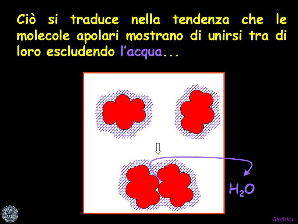 Biofisica Ciò si traduce nella tendenza che le molecole apolari mostrano di unirsi tra di loro escludendo l'acqua...