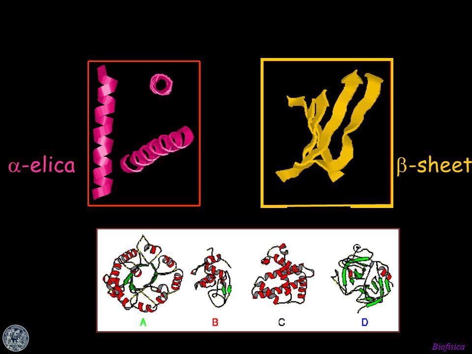 Biofisica Architettura delle <<<<<<<<<<<<< <<<<<<<<<<<<< <<<<<<<<<<<<< <<<<<<<<<<<<< <<<<<<<<<<<<< <<<<<<<<  -elica  -sheet