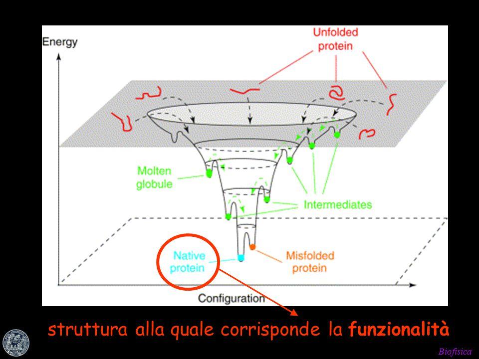 Biofisica struttura alla quale corrisponde la funzionalità