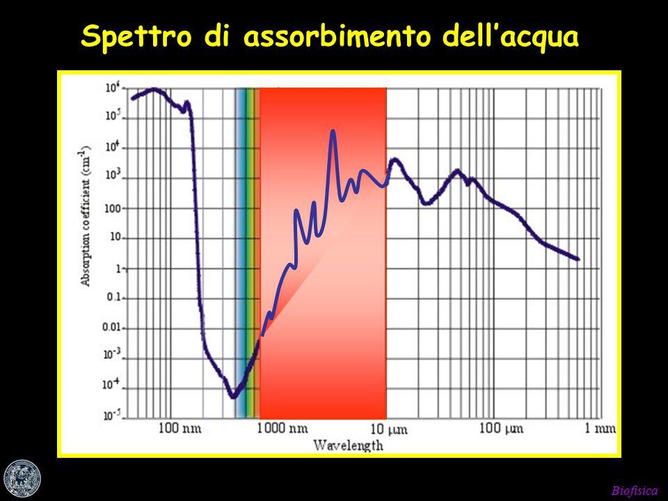 Biofisica Spettro di assorbimento dell'acqua