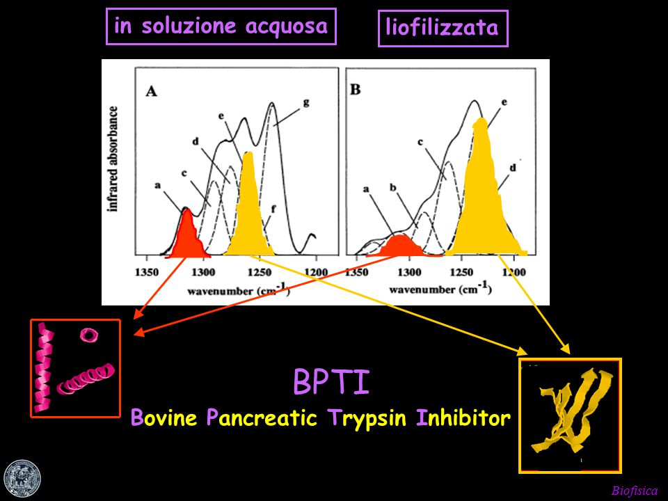 Biofisica in soluzione acquosa liofilizzata BPTI Bovine Pancreatic Trypsin Inhibitor