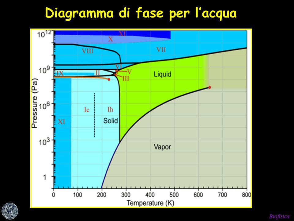 Biofisica Diagramma di fase per l'acqua