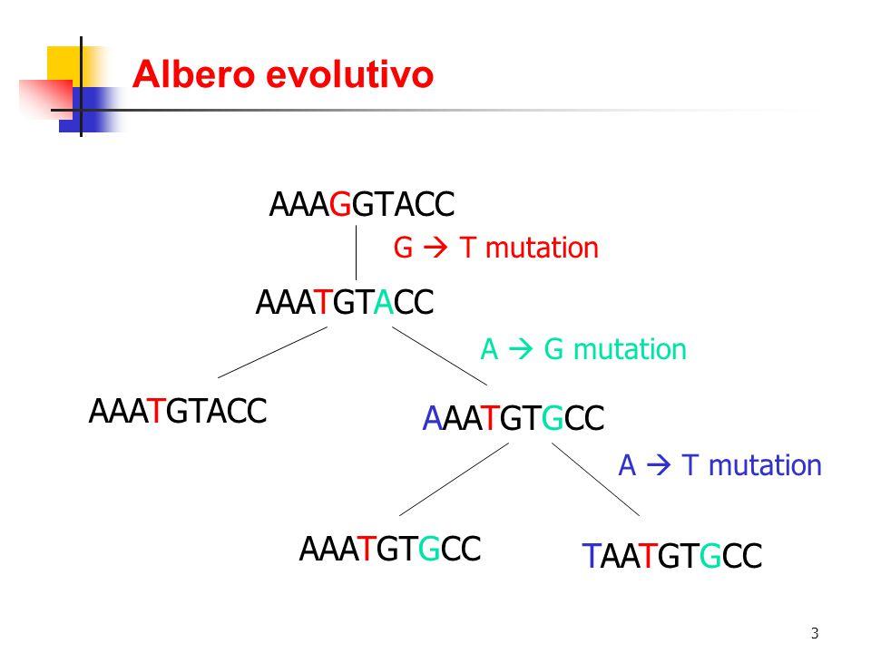 3 Albero evolutivo AAATGTACC AAATGTGCC TAATGTGCC AAAGGTACC AAATGTACC G  T mutation A  G mutation AAATGTGCC A  T mutation