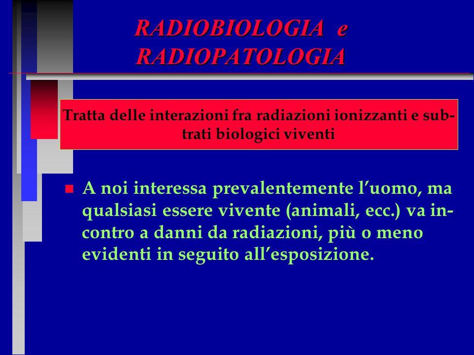 RADIOBIOLOGIA e RADIOPATOLOGIA Tratta delle interazioni fra radiazioni ionizzan ti e substrati biologici. n n A noi interessa prevalentemente l'uomo,