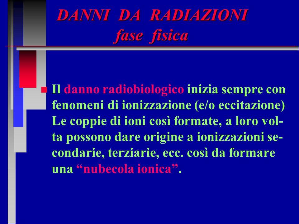 DANNI DA RADIAZIONI fase fisica n n Il danno radiobiologico inizia sempre con fenomeni di ionizzazione (e/o eccitazione) Le coppie di ioni così format