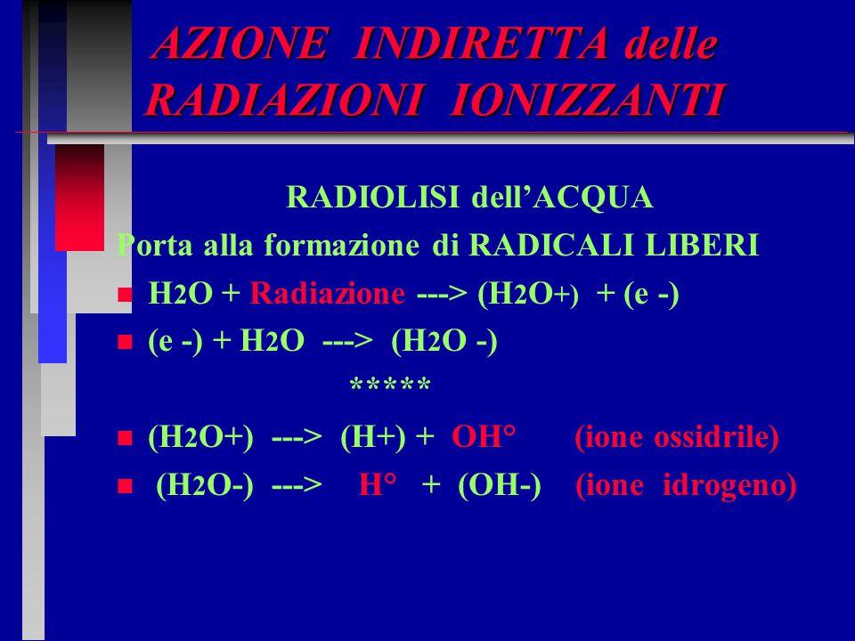 AZIONE INDIRETTA delle RADIAZIONI IONIZZANTI RADIOLISI dell'ACQUA Porta alla formazione di RADICALI LIBERI n n H 2 O + Radiazione ---> (H 2 O +) + (e