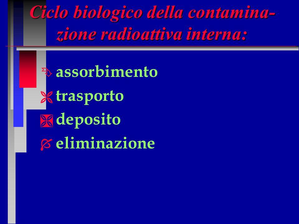 ASSORBIMENTO n n Attraverso la via respiratoria passano solo particelle con granulometria variante fra 0,5 - 5 micron.