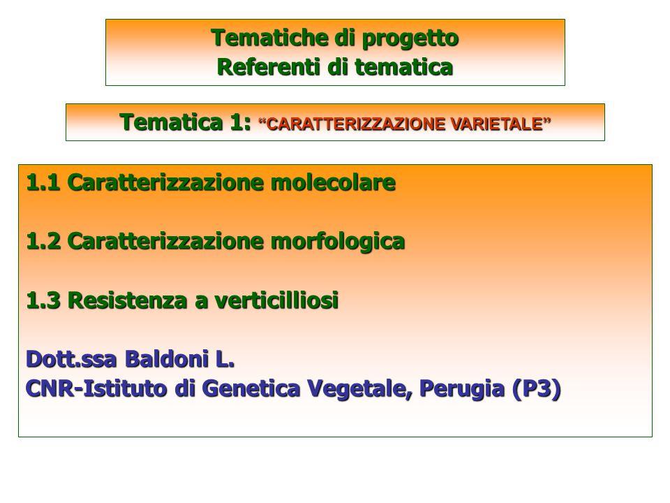 SCARTATE 1.1 Caratterizzazione molecolare 1.2 Caratterizzazione morfologica 1.3 Resistenza a verticilliosi Dott.ssa Baldoni L.