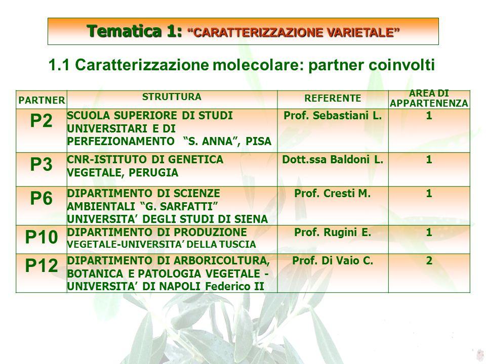 SCARTATE 1.1 Caratterizzazione molecolare: partner coinvolti PARTNER STRUTTURA REFERENTE AREA DI APPARTENENZA P2 SCUOLA SUPERIORE DI STUDI UNIVERSITARI E DI PERFEZIONAMENTO S.