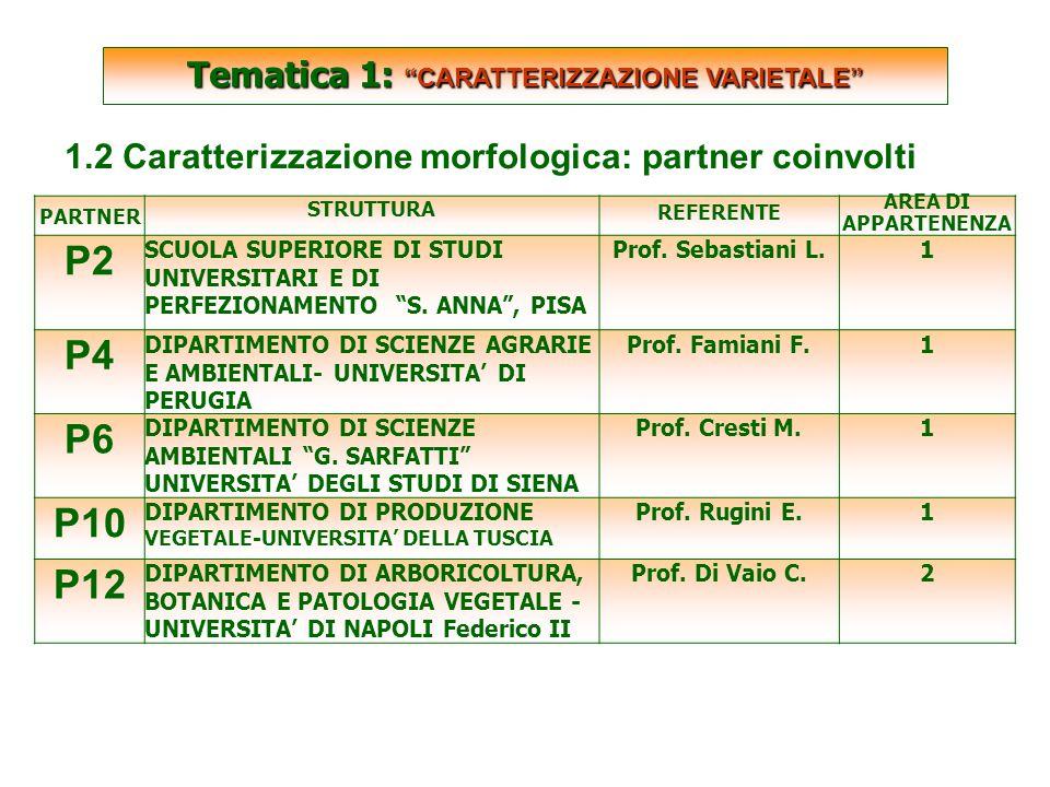 SCARTATE Tematica 1: CARATTERIZZAZIONE VARIETALE 1.2 Caratterizzazione morfologica: partner coinvolti PARTNER STRUTTURA REFERENTE AREA DI APPARTENENZA P2 SCUOLA SUPERIORE DI STUDI UNIVERSITARI E DI PERFEZIONAMENTO S.
