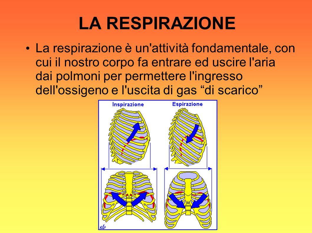 LA RESPIRAZIONE La respirazione è un attività fondamentale, con cui il nostro corpo fa entrare ed uscire l aria dai polmoni per permettere l ingresso dell ossigeno e l uscita di gas di scarico