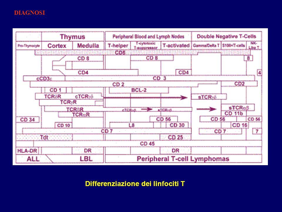 Differenziazione dei linfociti T DIAGNOSI