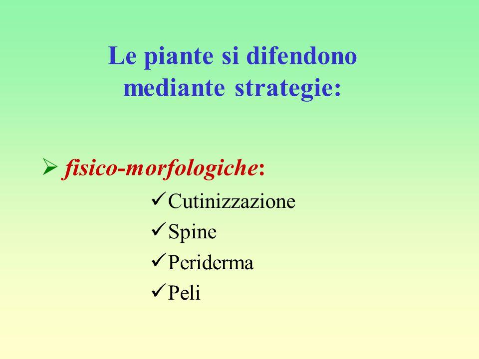 Le piante si difendono mediante strategie:  fisico-morfologiche: Cutinizzazione Spine Periderma Peli