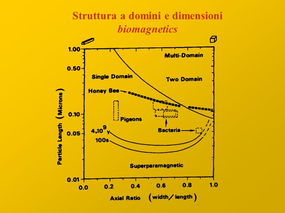 Struttura a domini e dimensioni biomagnetics
