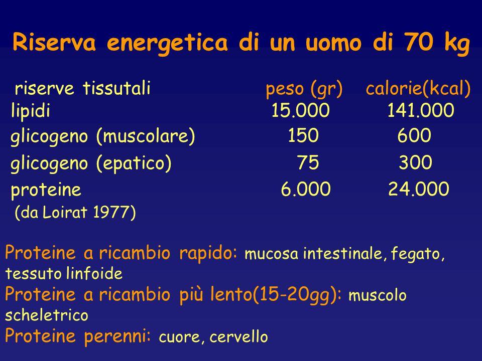 Riserva energetica di un uomo di 70 kg riserve tissutali peso (gr) calorie(kcal) lipidi 15.000 141.000 glicogeno (muscolare) 150 600 glicogeno (epatic