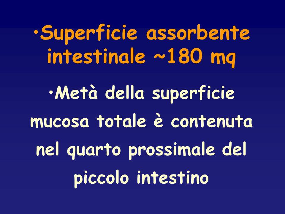 Superficie assorbente intestinale ~180 mq Metà della superficie mucosa totale è contenuta nel quarto prossimale del piccolo intestino