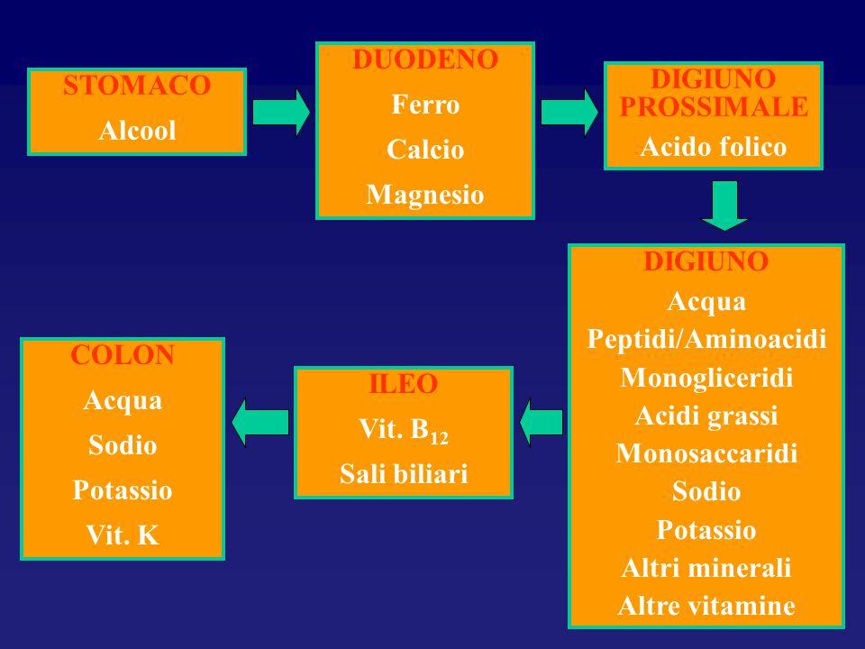 STOMACO Alcool DUODENO Ferro Calcio Magnesio DIGIUNO PROSSIMALE Acido folico DIGIUNO Acqua Peptidi/Aminoacidi Monogliceridi Acidi grassi Monosaccaridi