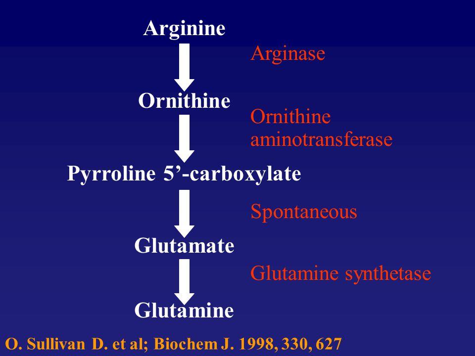 Arginine Ornithine Pyrroline 5'-carboxylate Glutamate Glutamine Arginase Ornithine aminotransferase Spontaneous Glutamine synthetase O. Sullivan D. et