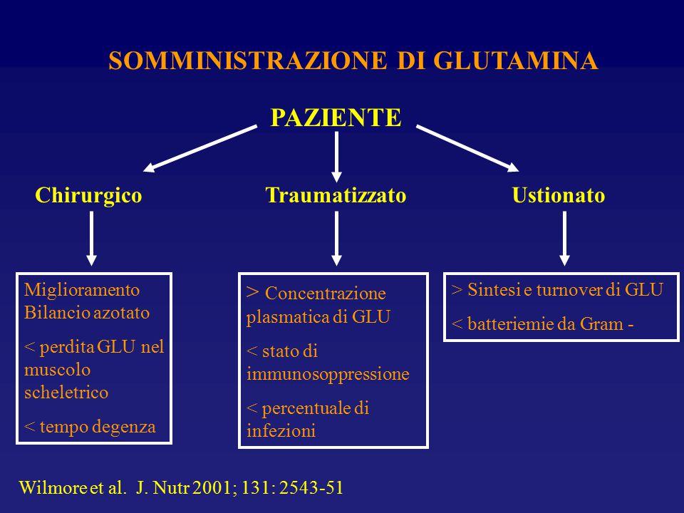SOMMINISTRAZIONE DI GLUTAMINA Chirurgico PAZIENTE Traumatizzato Ustionato Miglioramento Bilancio azotato < perdita GLU nel muscolo scheletrico < tempo