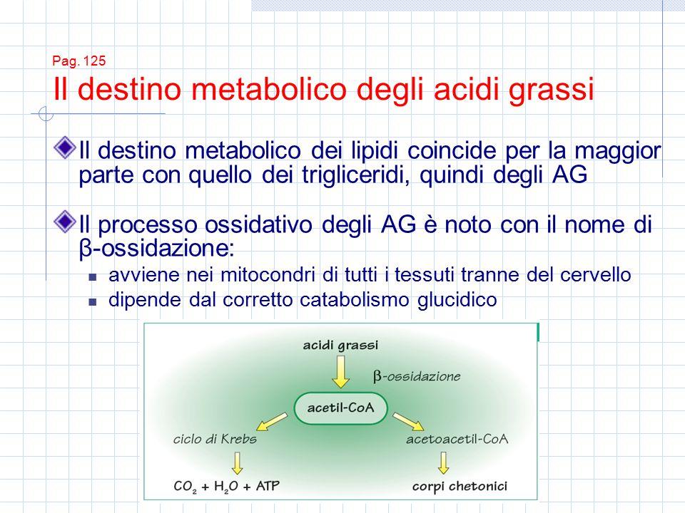 Pag. 125 Il destino metabolico degli acidi grassi Il destino metabolico dei lipidi coincide per la maggior parte con quello dei trigliceridi, quindi d