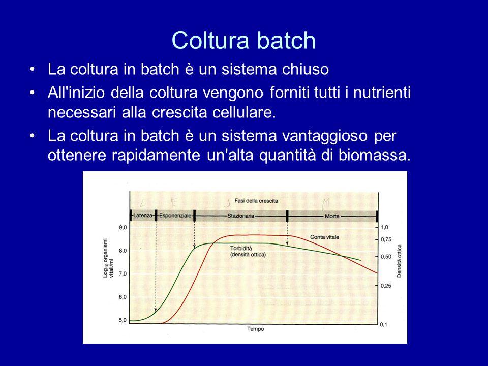 Coltura batch La coltura in batch è un sistema chiuso All'inizio della coltura vengono forniti tutti i nutrienti necessari alla crescita cellulare. La