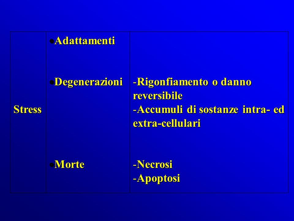 Stress  Adattamenti  Degenerazioni  Morte -Rigonfiamento o danno reversibile -Accumuli di sostanze intra- ed extra-cellulari -Necrosi -Apoptosi