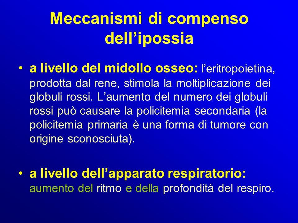 Meccanismi di compenso dell'ipossia a livello del midollo osseo: l'eritropoietina, prodotta dal rene, stimola la moltiplicazione dei globuli rossi. L'