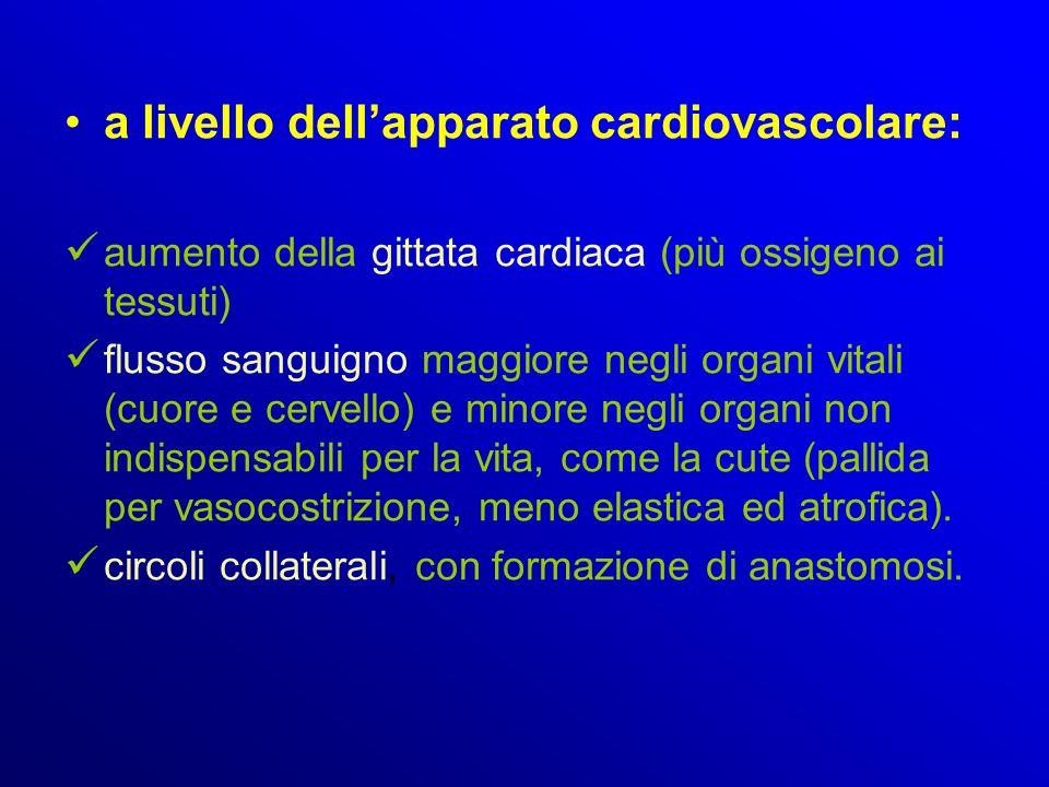 a livello dell'apparato cardiovascolare: aumento della gittata cardiaca (più ossigeno ai tessuti) flusso sanguigno maggiore negli organi vitali (cuore