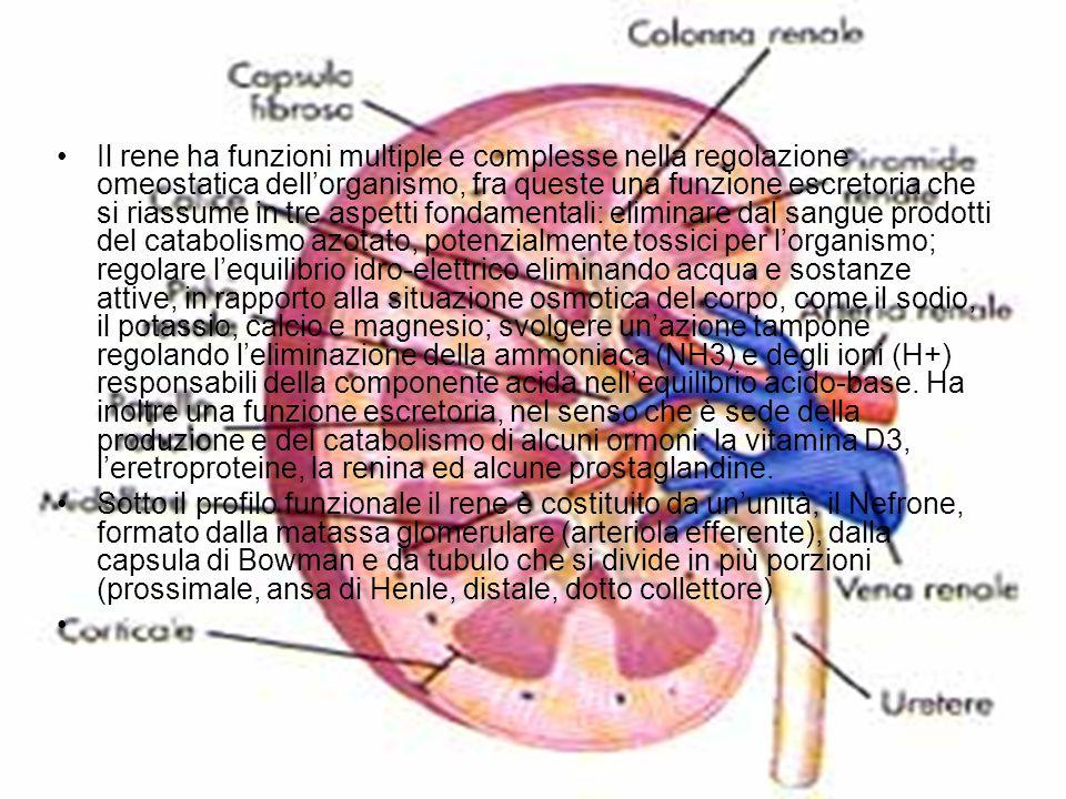 Il rene ha funzioni multiple e complesse nella regolazione omeostatica dell'organismo, fra queste una funzione escretoria che si riassume in tre aspet
