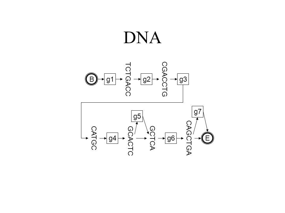 DNA g1 TCTGACC g2 CGACCTG g3 CATGC g4 GCACTC GCTCA g6 CAGCTGA B E g5 g7