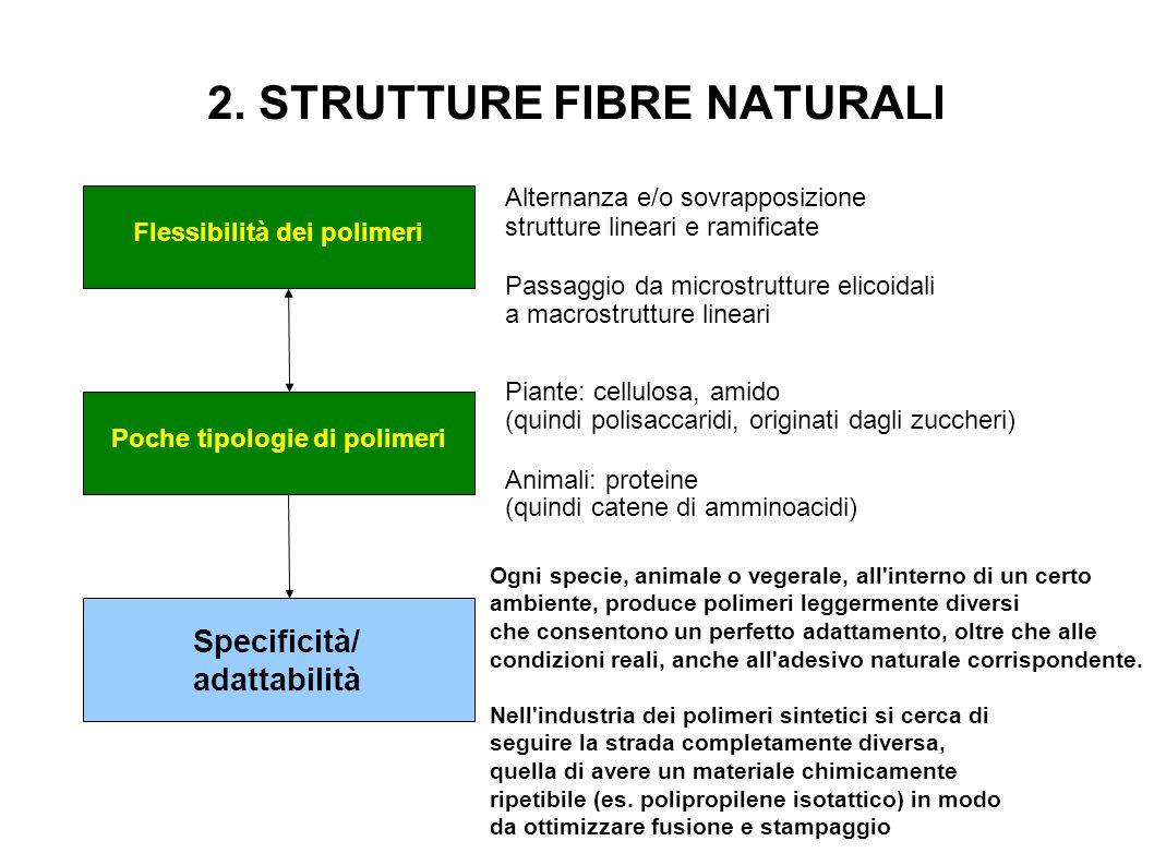 2. STRUTTURE FIBRE NATURALI Flessibilità dei polimeri Alternanza e/o sovrapposizione strutture lineari e ramificate Passaggio da microstrutture elicoi