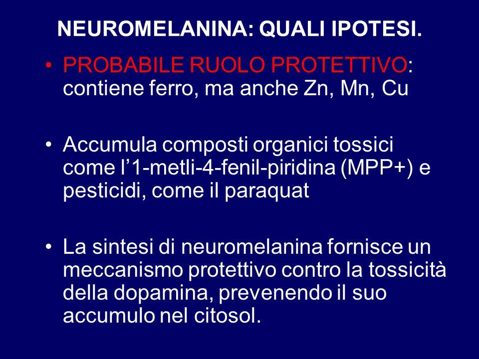NEUROMELANINA: QUALI IPOTESI. PROBABILE RUOLO PROTETTIVO: contiene ferro, ma anche Zn, Mn, Cu Accumula composti organici tossici come l'1-metli-4-feni
