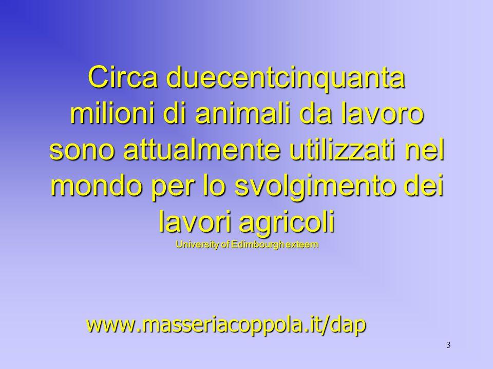 3 Circa duecentcinquanta milioni di animali da lavoro sono attualmente utilizzati nel mondo per lo svolgimento dei lavori agricoli University of Edimbourgh exteem www.masseriacoppola.it/dap