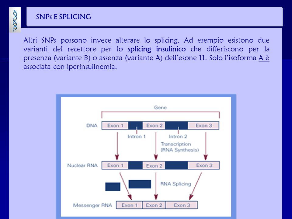 SNPs E SPLICING Altri SNPs possono invece alterare lo splicing. Ad esempio esistono due varianti del recettore per lo splicing insulinico che differis