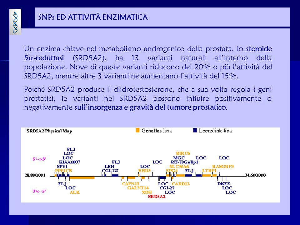 SNPs ED ATTIVITÀ ENZIMATICA Un enzima chiave nel metabolismo androgenico della prostata, lo steroide 5  -reduttasi (SRD5A2), ha 13 varianti naturali all'interno della popolazione.